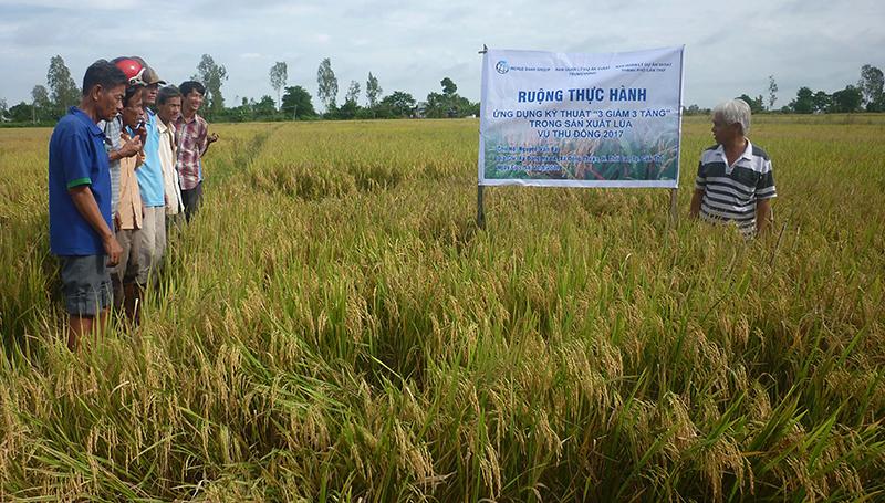 """Nông dân trên địa bàn TP Cần Thơ canh tác lúa ứng dụng kỹ thuật """"3 giảm 3 tăng"""", tiết kiệm nước, nâng cao hiệu quả trong sản xuất. Ảnh: HÀ VĂN"""