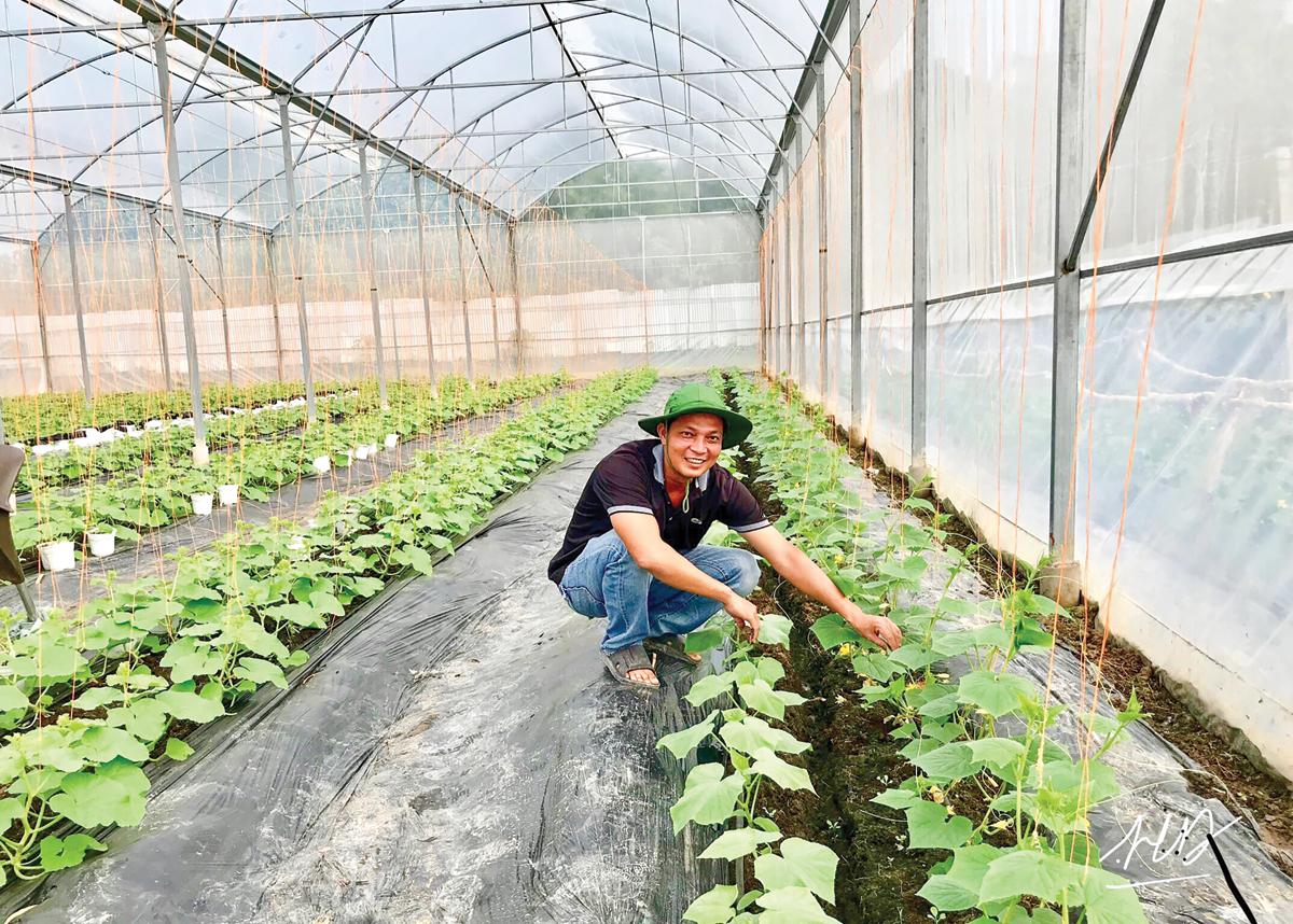 Mô hình trồng rau trong nhà kính ở quận Bình Thủy (TP Cần Thơ) đảm bảo an toàn chất lượng và cho năng suất cao.