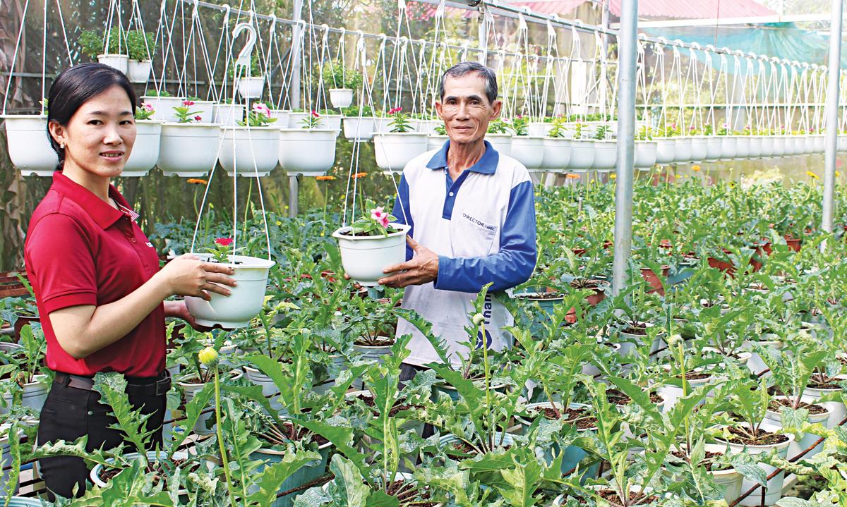 Ông Lâm Quang Hồng đầu tư hệ thống nhà kín để trồng hoa treo chậu, đáp ứng nhu cầu khách hàng.