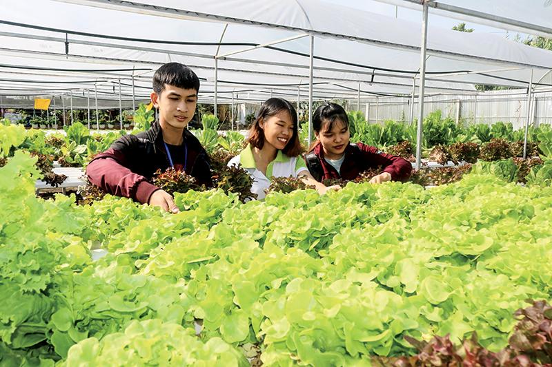 Cần Thơ Farm là mô hình được nhiều người  tham quan và trải nghiệm cách làm nông sản sạch... Ảnh: MỸ HOA