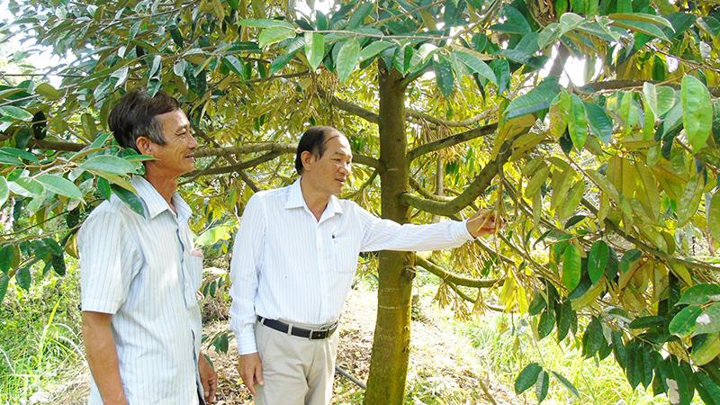 Cán bộ Hội Nông dân thị trấn Phong Điền (bên phải) thăm mô hình trồng sầu riêng của hội viên. Ảnh: THANH THY