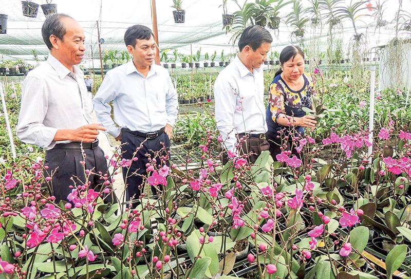 Trồng hoa lan ứng dụng công nghệ cao tại Cơ sở Phong Lan An Bình, phường Long Hòa, quận Bình Thủy. Ảnh: MỸ THANH