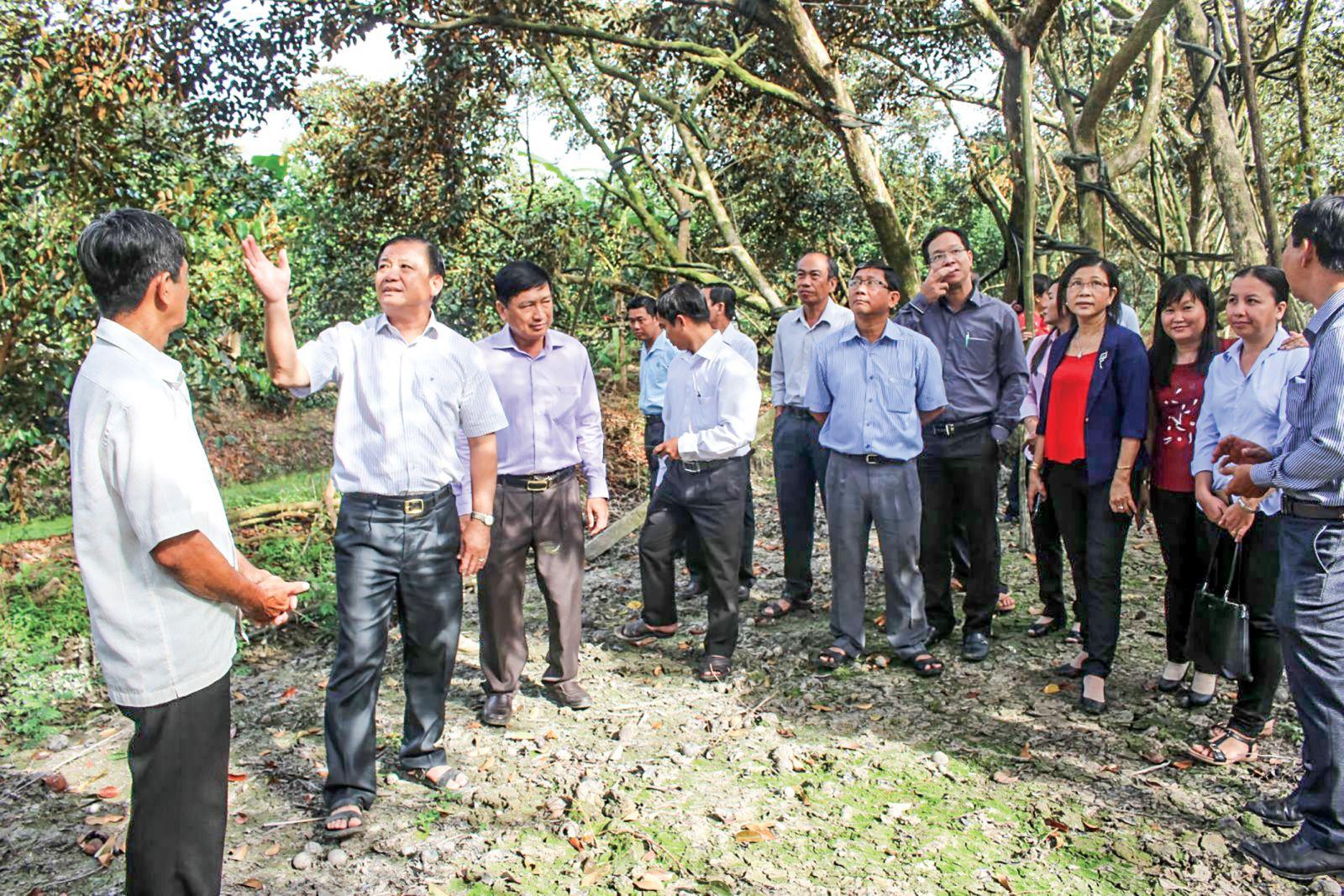 Ông Đào Anh Dũng, Phó Chủ tịch UBND TP Cần Thơ (thứ hai từ trái sang) cùng lãnh đạo Sở NN&PTNT thành phố, huyện Phong Điền kiểm tra quy trình sản xuất vú sữa tại Hợp tác xã vườn cây ăn trái ấp Trường Khương A. Ảnh: HÀ VĂN
