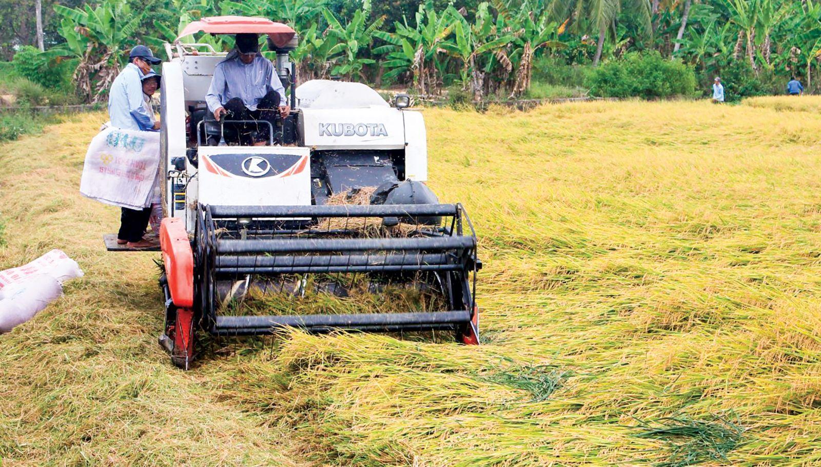 Thu hoạch lúa bằng máy gặt đập liên hợp tại ruộng của ông Lê Tấn Lộc ngụ  xã Xuân Thắng. Ảnh: KHÁNH TRUNG