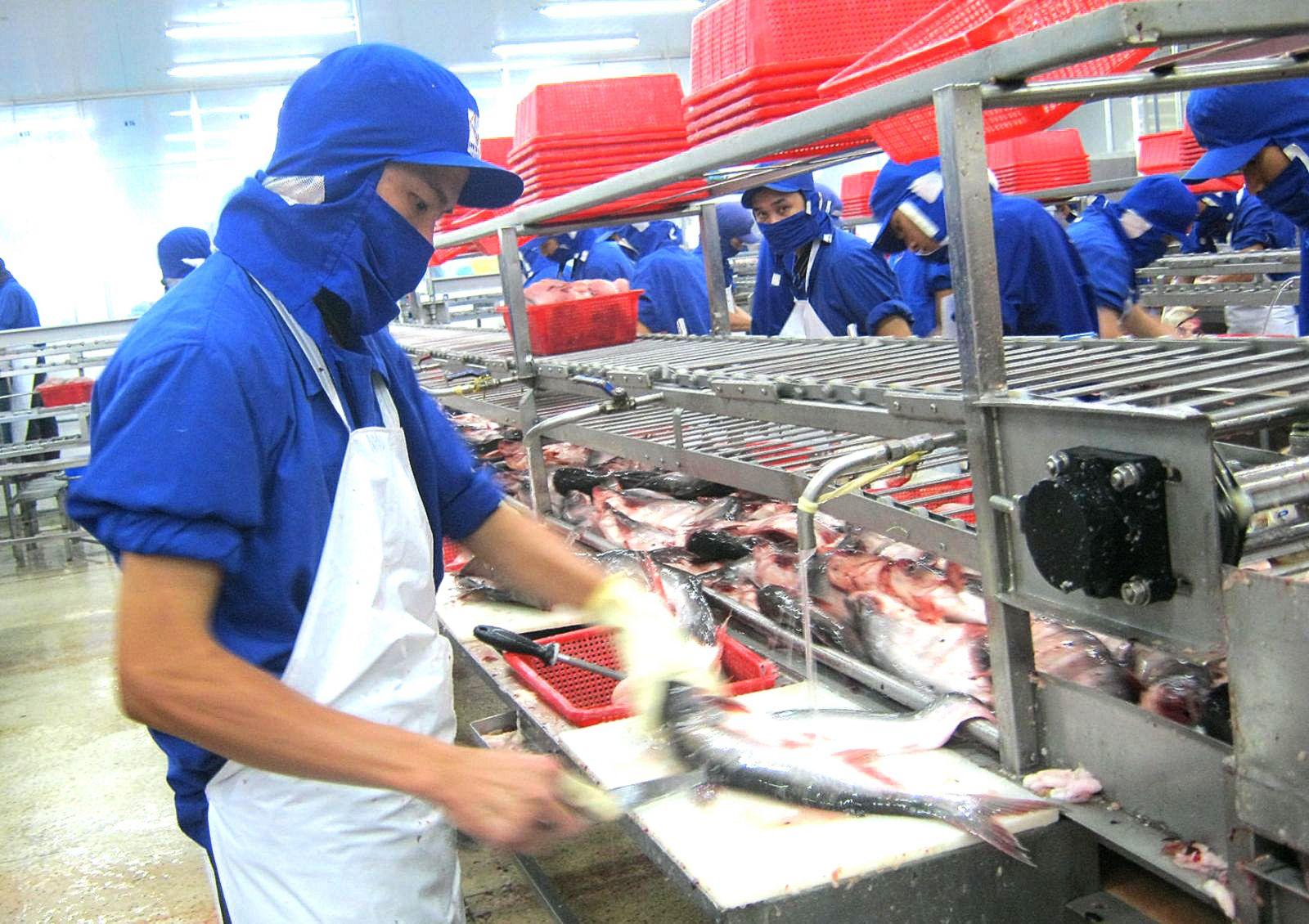 Ngành hàng cá tra là một trong những ưu tiên tín dụng của ngân hàng (Chế biến cá tra xuất khẩu tại Công ty TNHH Công nghiệp thủy sản Miền Nam). Ảnh: MINH HUYỀN