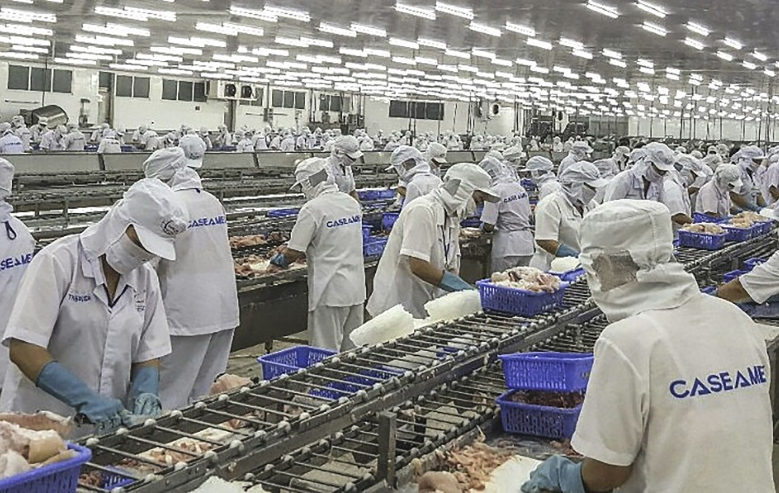 Qua thực hiện tốt QCDC, NLĐ Công ty Cổ phần Xuất Nhập khẩu Thủy sản Cần Thơ an tâm gắn bó công việc, tích cực lao động sản xuất. Ảnh: CTV