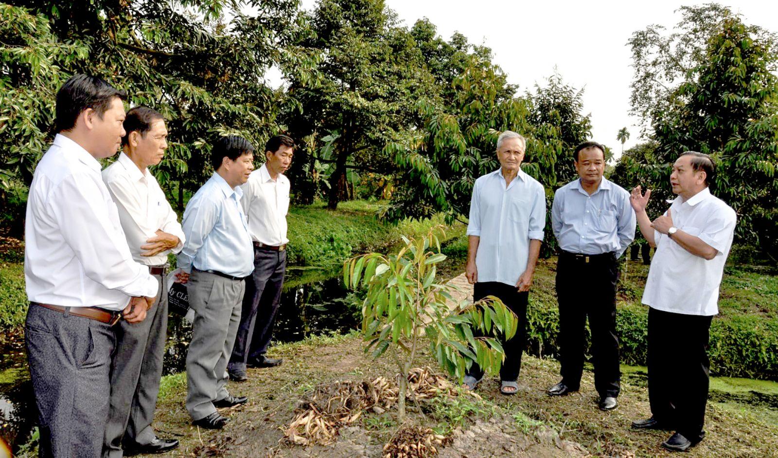 Đồng chí Trần Quốc Trung, Ủy viên Trung ương Đảng, Bí thư Thành ủy (bìa phải) tham quan mô hình cải tạo vườn, trồng cây ăn trái ở huyện Thới Lai.