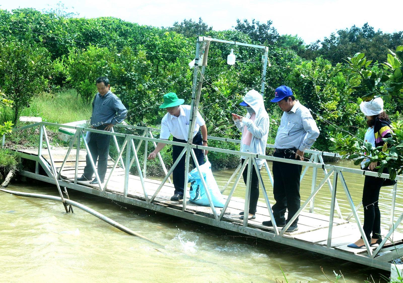 Du khách ngắm nhìn những con cá lớn từ 8-10 kg dọc các mương ở vườn của ông Đỗ Trung Ngôn. Ảnh: ÁI LAM