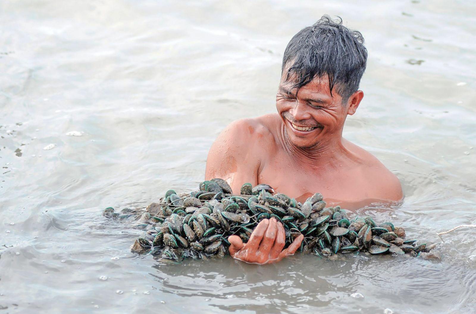 Nông dân xã Nam Yên, huyện An Biên thu hoạch vẹm xanh.