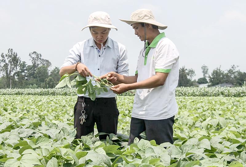 Anh Huỳnh Văn Chiến, Giám đốc HTX Nông nghiệp Thân Thiện (phải) trao đổi với cán bộ phường về quá trình sản xuất đậu nành rau. Ảnh: CÁT ĐẰNG