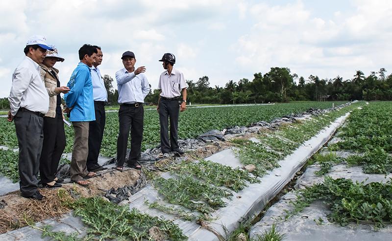 Các địa phương tập trung triển khai những mô hình sản xuất nông nghiệp hiệu quả, tăng thu nhập cho người dân, góp phần xây dựng nông thôn mới. Trong ảnh: Mô hình trồng dưa hấu tại huyện Thới Lai. Ảnh: T. TRINH