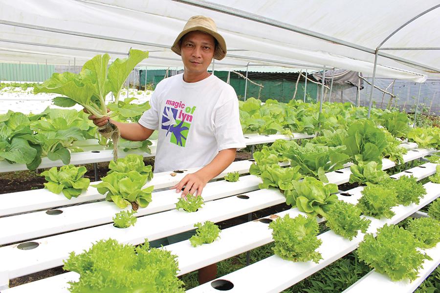 Nhiều nông dân thành phố đã chủ động phát triển các mô hình sản xuất thích ứng với BĐKH. Trong ảnh: Anh Nguyễn Văn Phong, quận Bình Thủy ứng dụng thành công mô hình trồng rau thủy canh trong nhà kính. Ảnh: THANH THƯ