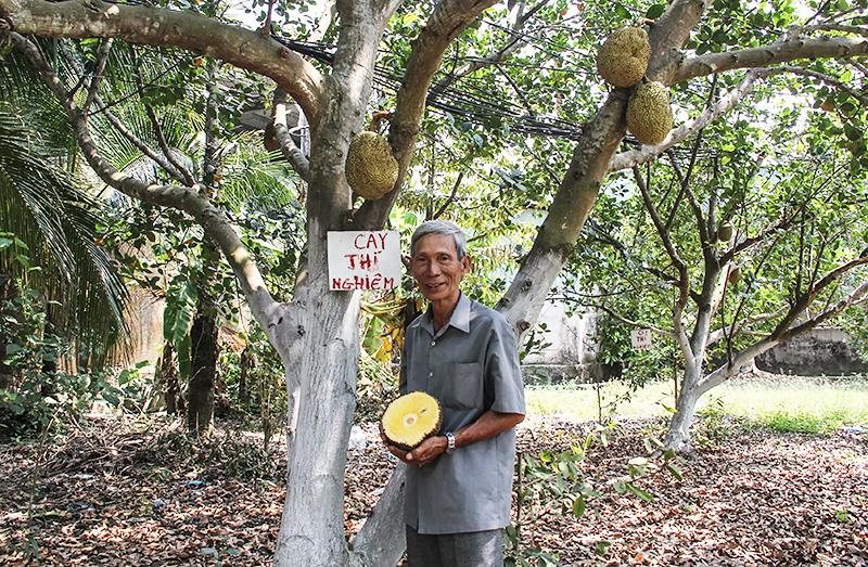 Giống mít không hạt do ông Trần Minh Mẫn lai tạo (phường Ba Láng, quận Cái Răng) không chỉ cung ứng trong nước mà còn xuất sang các nước lân cận như: Thái Lan, Campuchia, Lào, Myanmar... Ảnh: QUẾ LIM