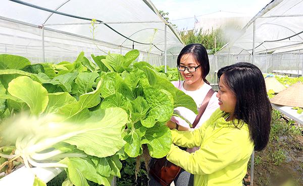 Du khách thích thú thu hoạch rau xanh tại Cần Thơ Farm. Ảnh: MỸ HOA