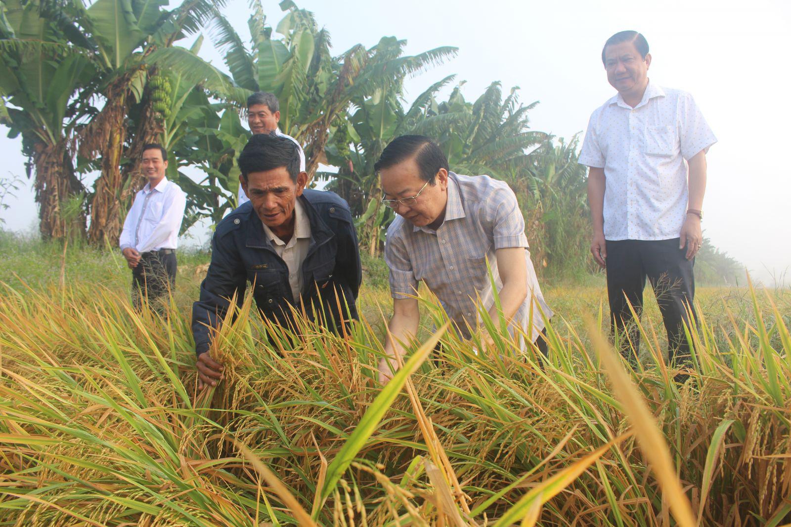 Đồng chí Lê Tấn Thủ, Bí thư Quận ủy Bình Thủy (thứ 2 từ phải sang) thăm hỏi bà con nông dân về tình hình sản xuất lúa đông xuân. Ảnh: MINH HUYỀN