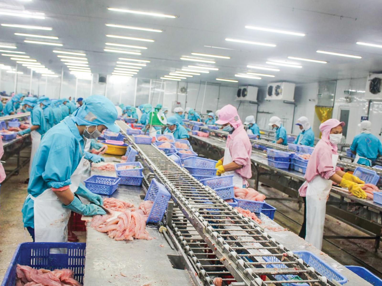 Chế biến cá tra xuất khẩu tại Công ty TNHH Công nghiệp thủy sản Miền Nam ở TP Cần Thơ. Ảnh: KHÁNH TRUNG