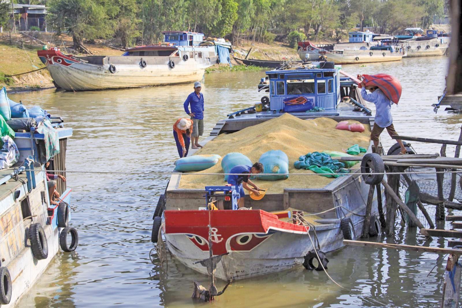 Mua lúa trên kênh Vĩnh Tế, An Giang (ảnh tư liệu). Ảnh: CHÂU LAN