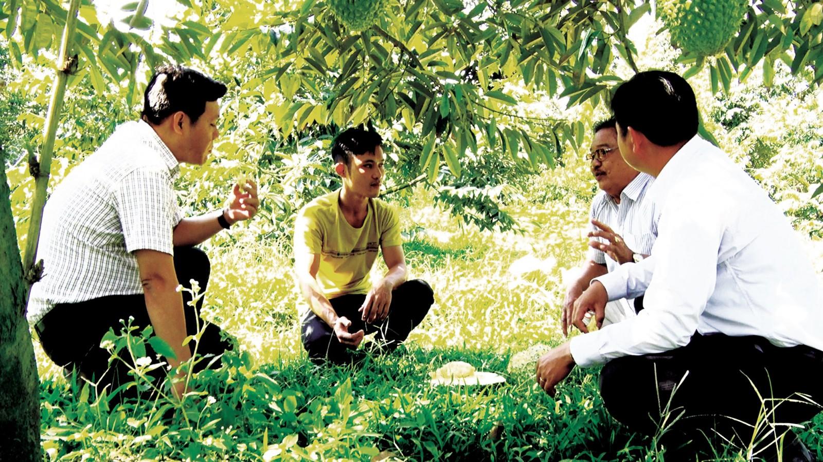 Anh Huỳnh Văn Đầy (áo vàng)- mời khách thưởng thức sầu riêng sớm vụ ngay tại vườn nhà. Ảnh: MAI THẢO