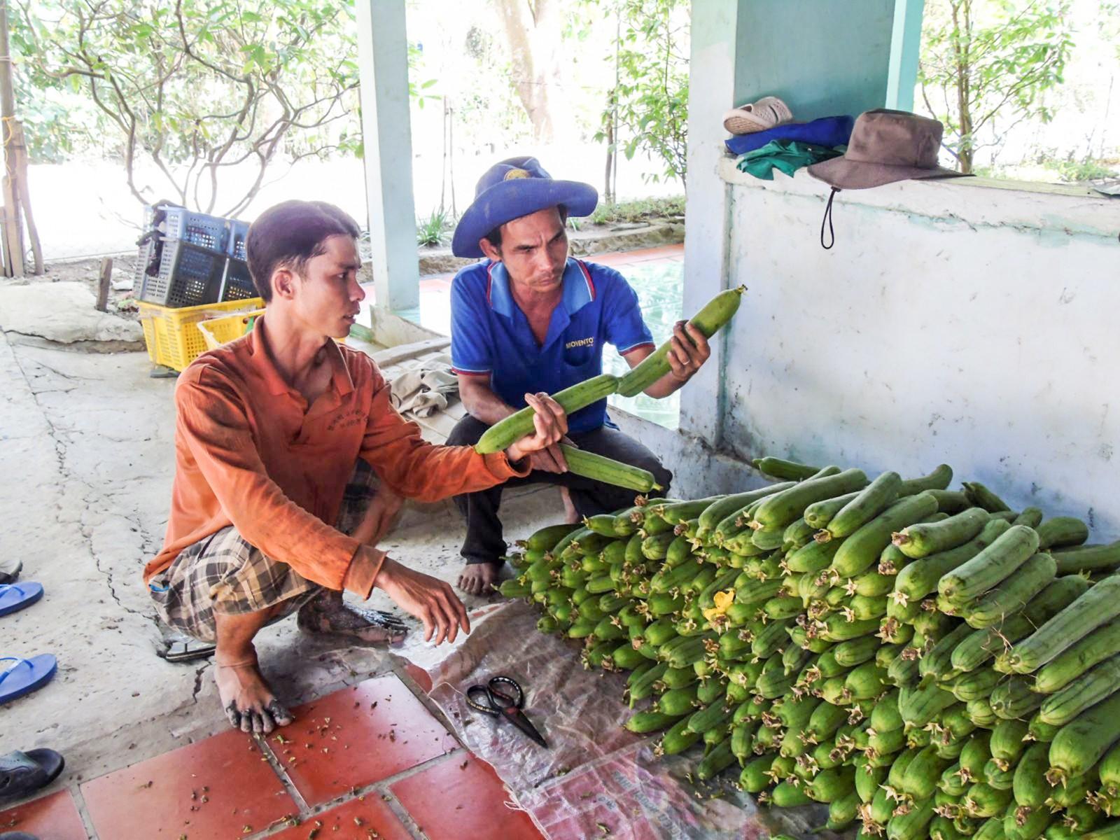 Ông Trần Quang Phục (bên phải) thăm hỏi tình hình sản xuất của bà con. Ảnh: THANH THY