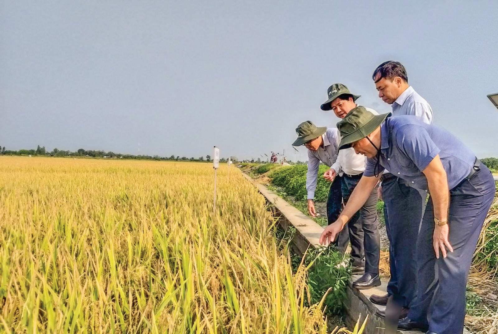 Thứ trưởng Bộ Nông nghiệp và Phát triển nông thôn Lê Quốc Doanh (thứ 2 từ trái sang) tham quan khu vực thí nghiệm các giống lúa mới của Viện Lúa ĐBSCL. Ảnh: MINH HUYỀN