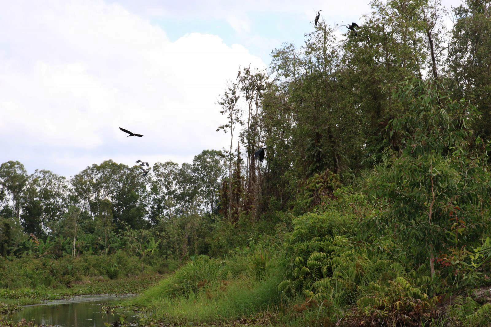 Có hơn 50 loài chim đến sống và sinh sản ở Lung Ngọc Hoàng. Du khách nên đến trước 8 giờ sáng để ngắm nhìn từng đàn chim tỏa nhau đi kiếm ăn.
