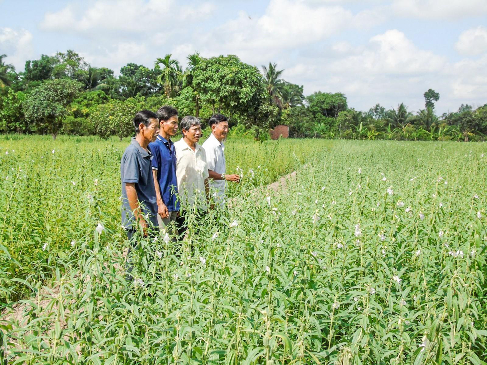 Nhiều hộ dân ở khu vực Thới Thuận chuyển đổi mô hình sản xuất mang lại hiệu quả kinh tế cao. Ảnh: THANH THY