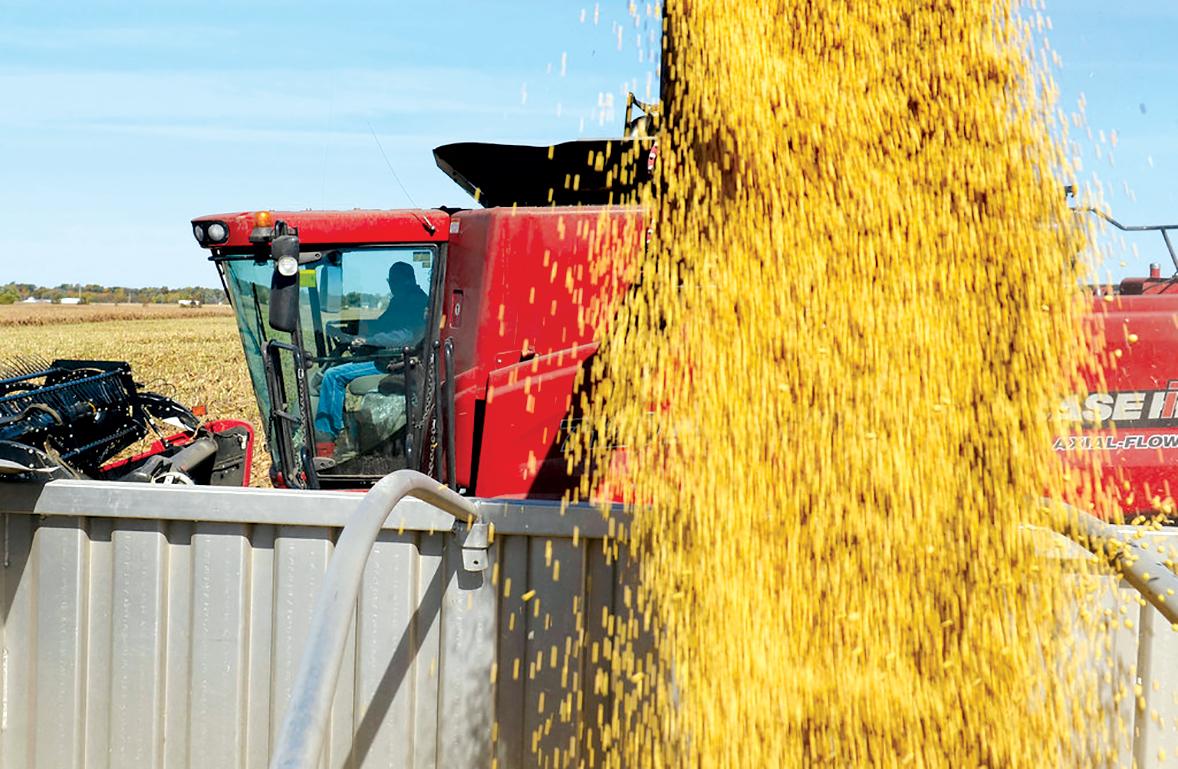 Người trồng đậu nành Mỹ gặp khó vì thương chiến với Trung Quốc. Ảnh: AP