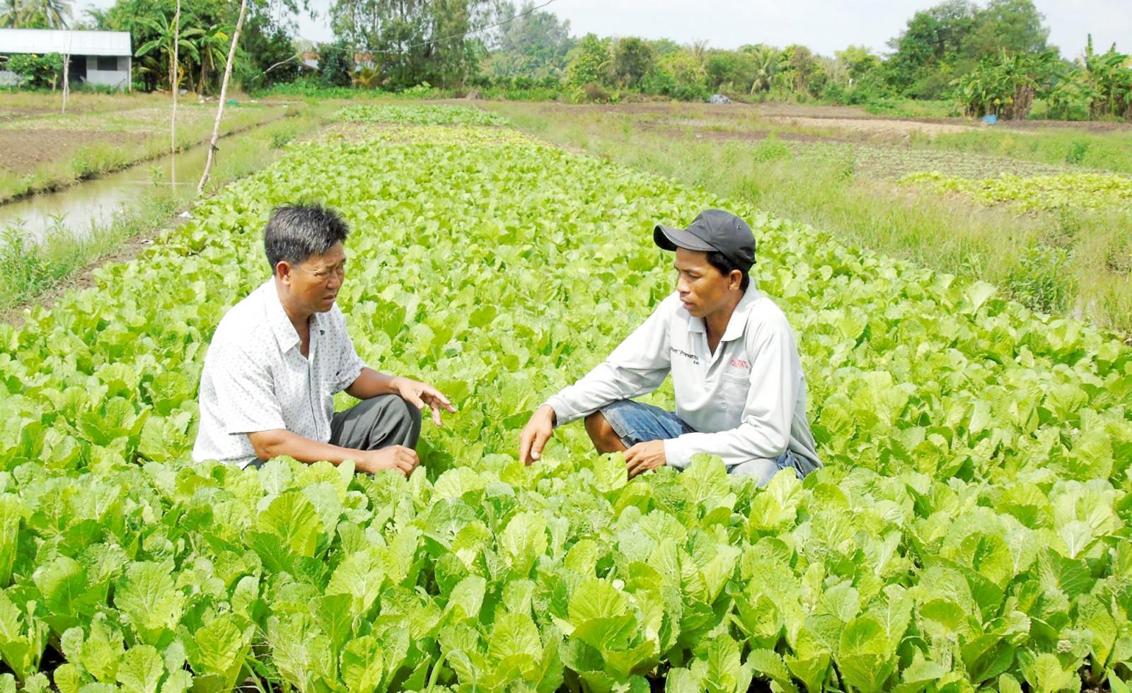 Đồng chí Huỳnh Văn Đoàn (bên trái) thăm mô hình trồng màu của dân. Ảnh: THANH THY