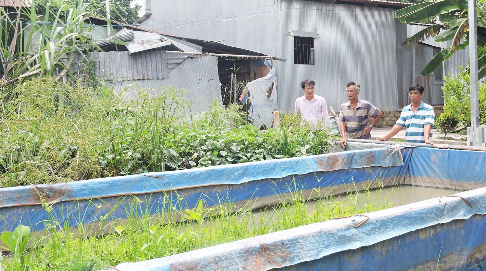 Ông Trần Văn Tổng (giữa) giới thiệu mô hình nuôi lươn của gia đình. Ảnh: MỸ TÚ