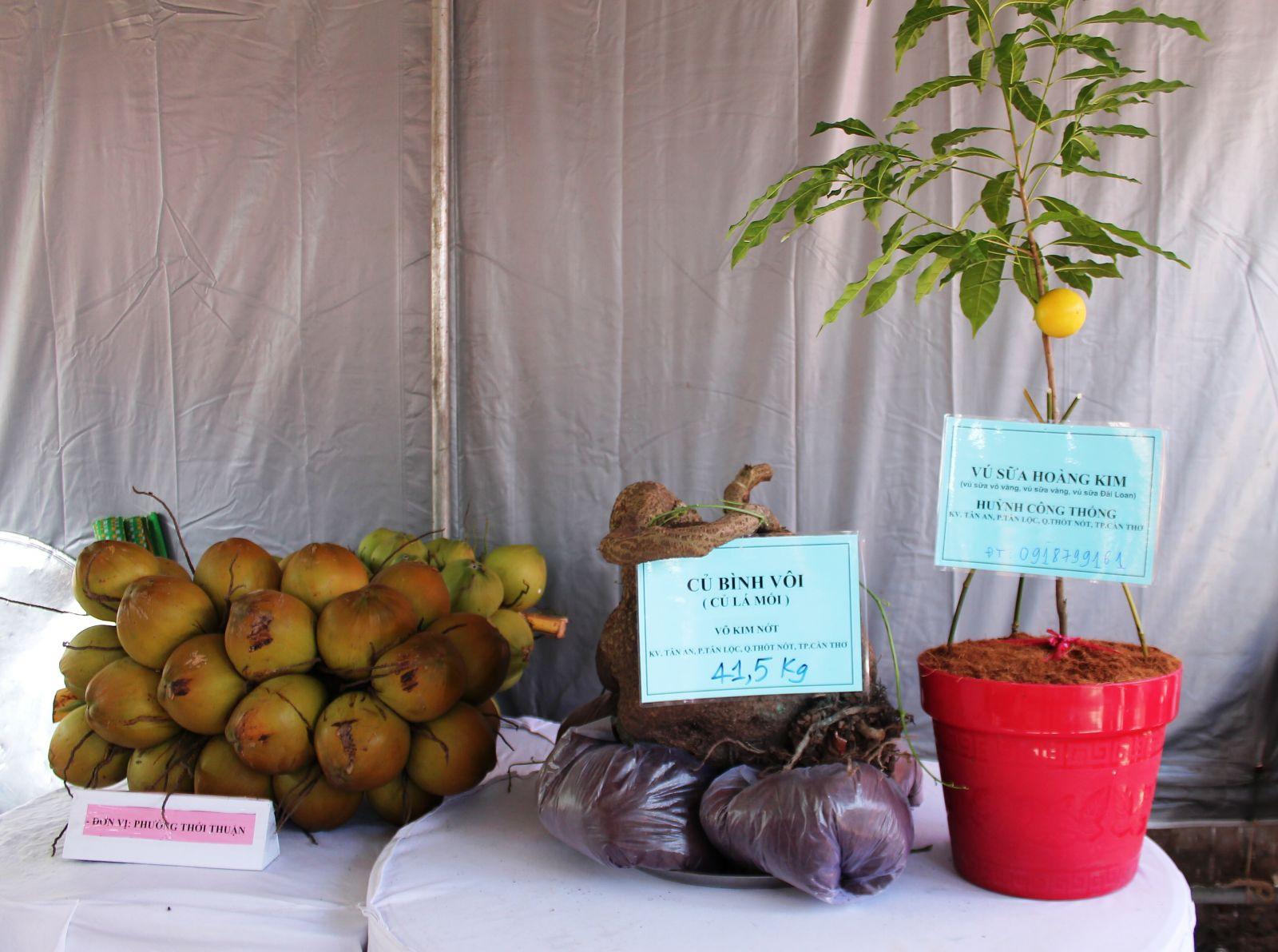"""Hội thi """"cây, củ quả lạ"""" với nhiều cây trái độc đáo là một trong những điểm thu hút tại lễ hội."""