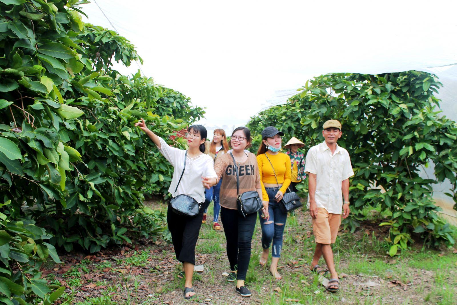Tham quan vườn trái cây trên cù lao tươi xanh, yên bình là một hoạt động không thể thiếu của du khách khi đến với lễ hội.