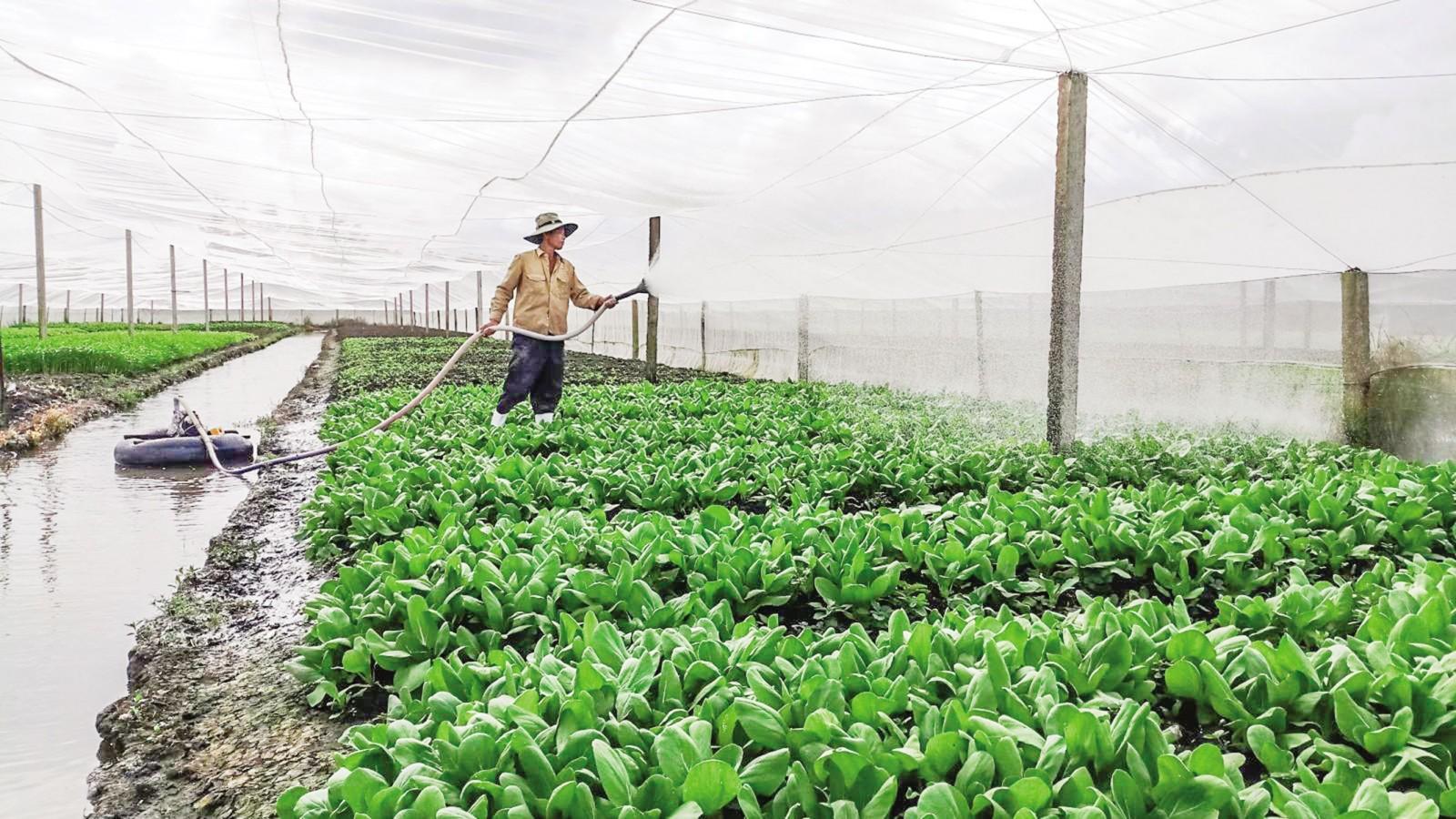 Sản xuất rau an toàn trên địa bàn quận Cái Răng, TP Cần Thơ.