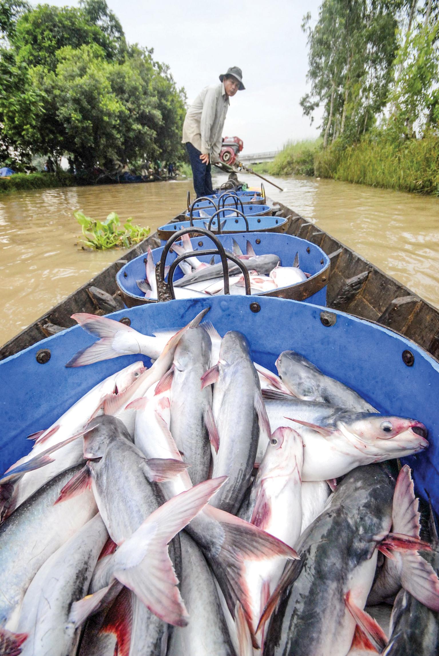 """Việt Nam là 1 trong 6 quốc gia sẽ thực hiện Dự án """"Chuỗi cung ứng có trách nhiệm tại châu Á"""" trong đó có ngành thủy sản. Ảnh: Lê Hoàng Yến"""