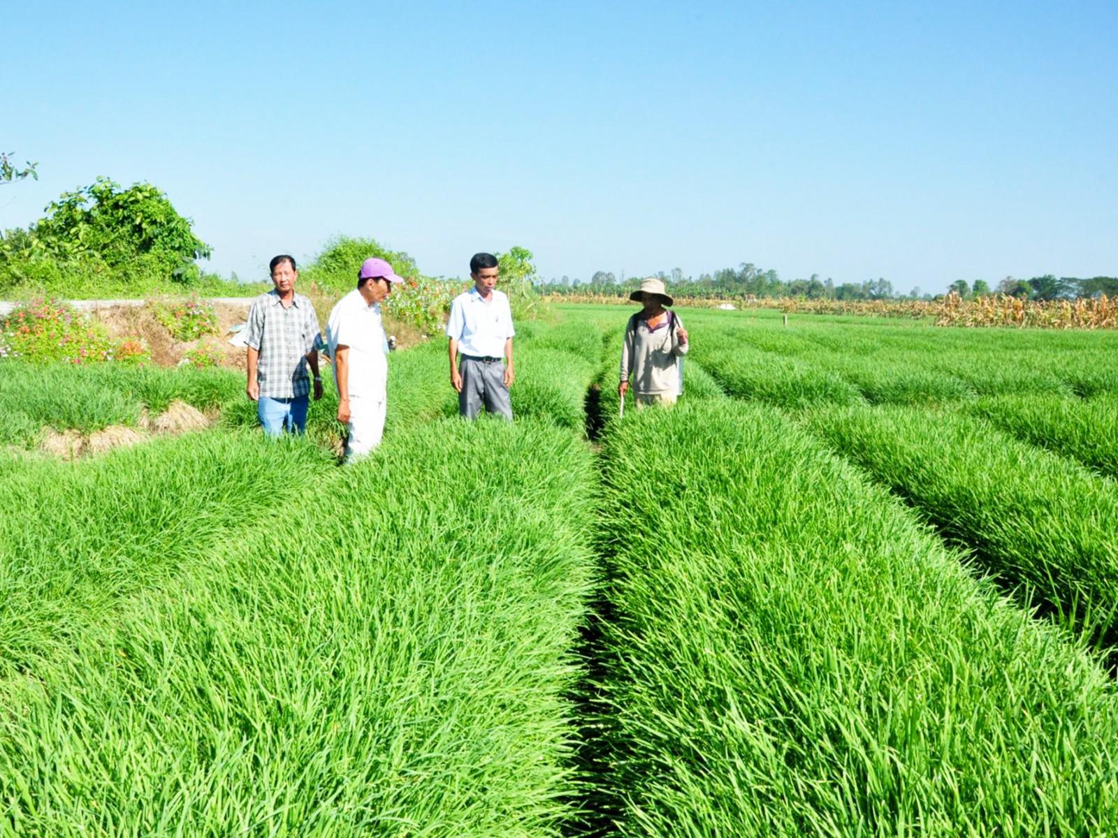 Cán bộ phường Thạnh Hòa, quận Thốt Nốt tham quan mô hình rau sạch của nhân dân.