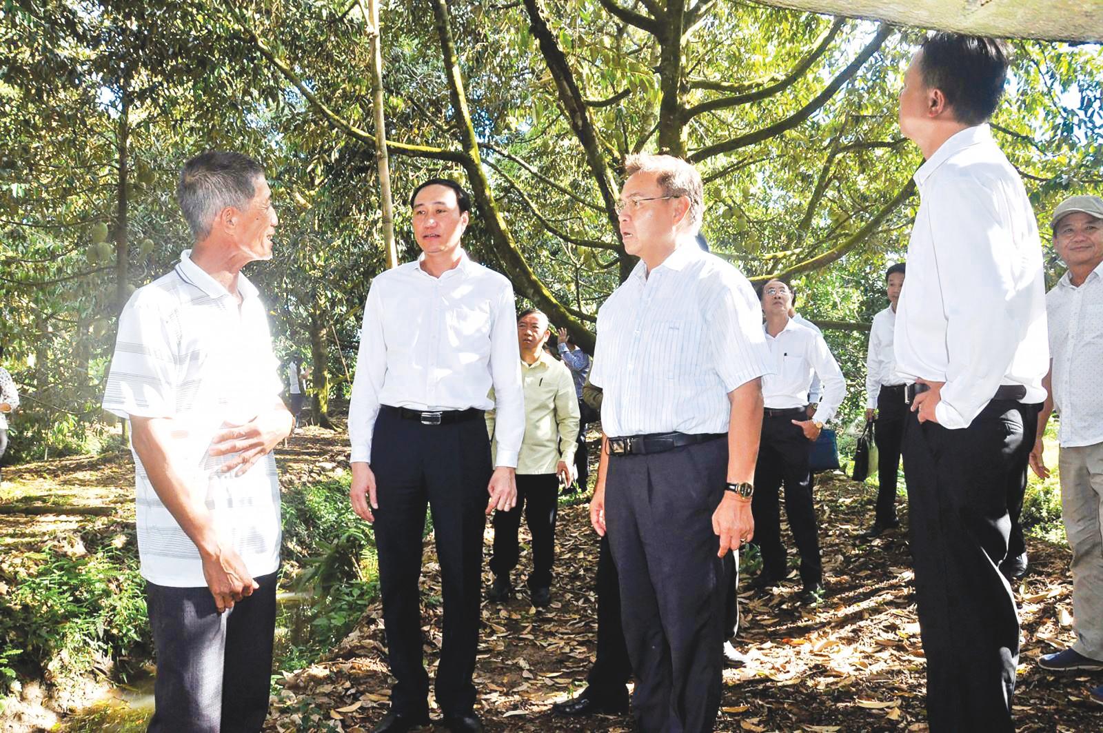 Đồng chí Xay-xổm-phon Phôm-vi-hản, Chủ tịch Ủy ban Trung ương Mặt trận Lào xây dựng đất nước (thứ 2 bên phải sang) tham quan mô hình trồng sầu riêng tại xã Tân Thới. Ảnh: A.D