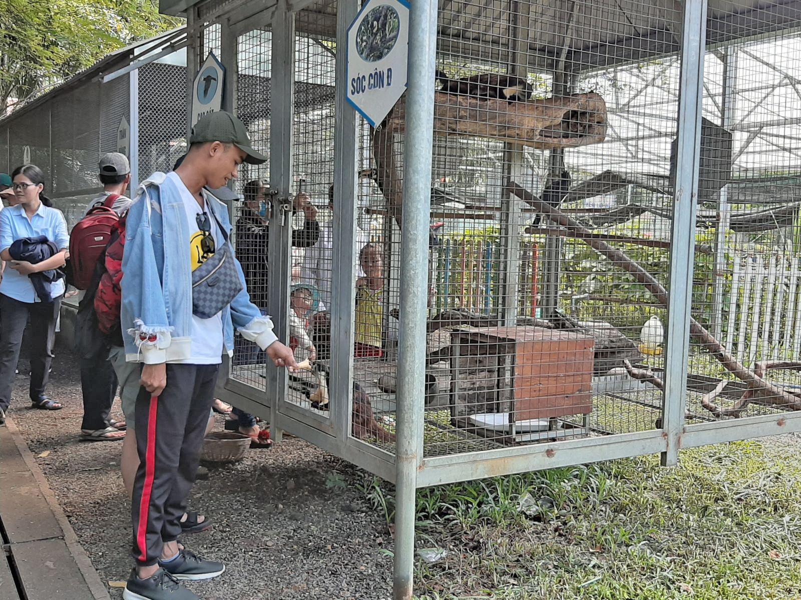 Các bạn trẻ tham quan vườn thú.