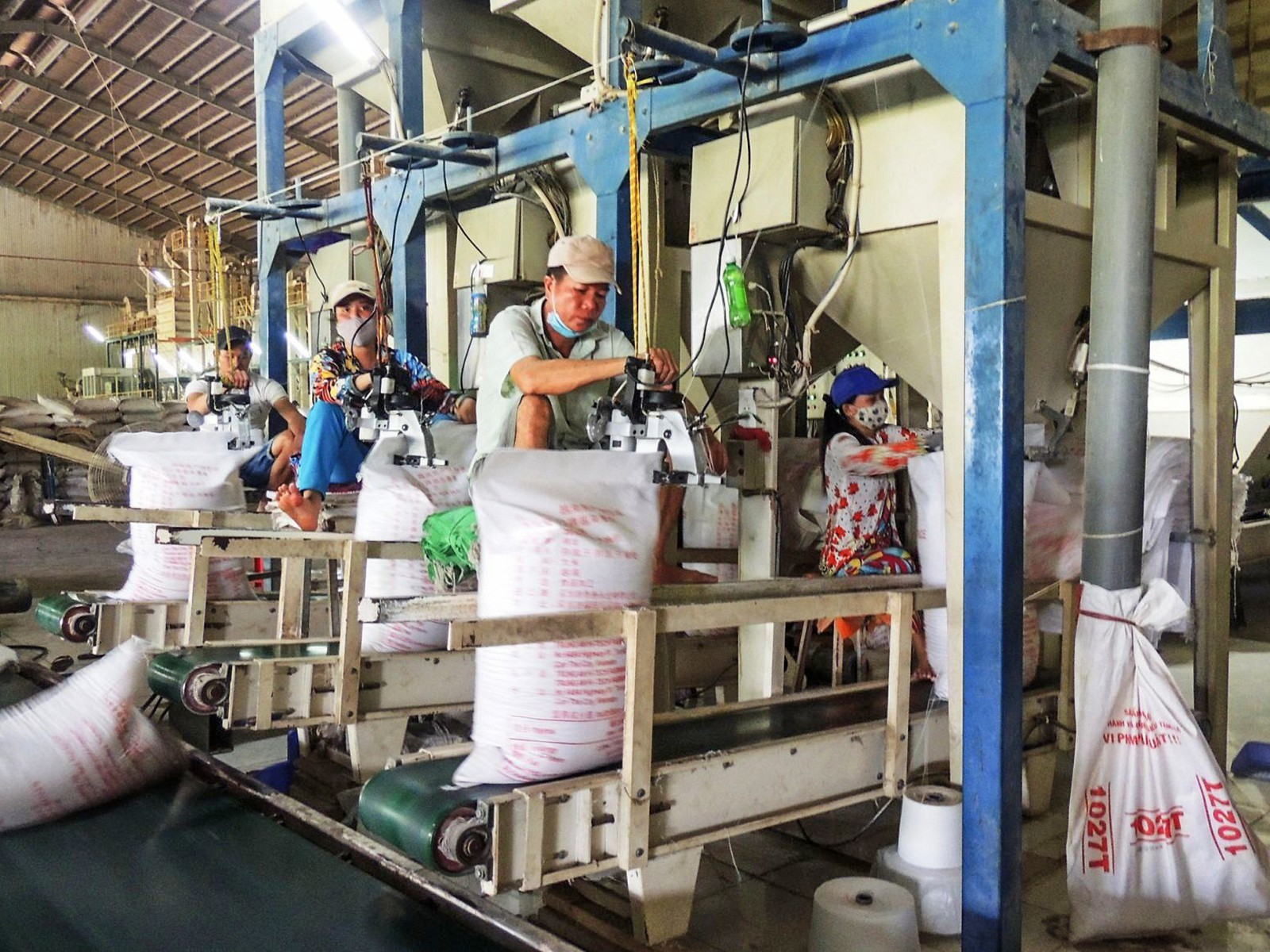 Gạo là một trong những mặt hàng có tiềm năng xuất khẩu sang thị trường Trung Đông.