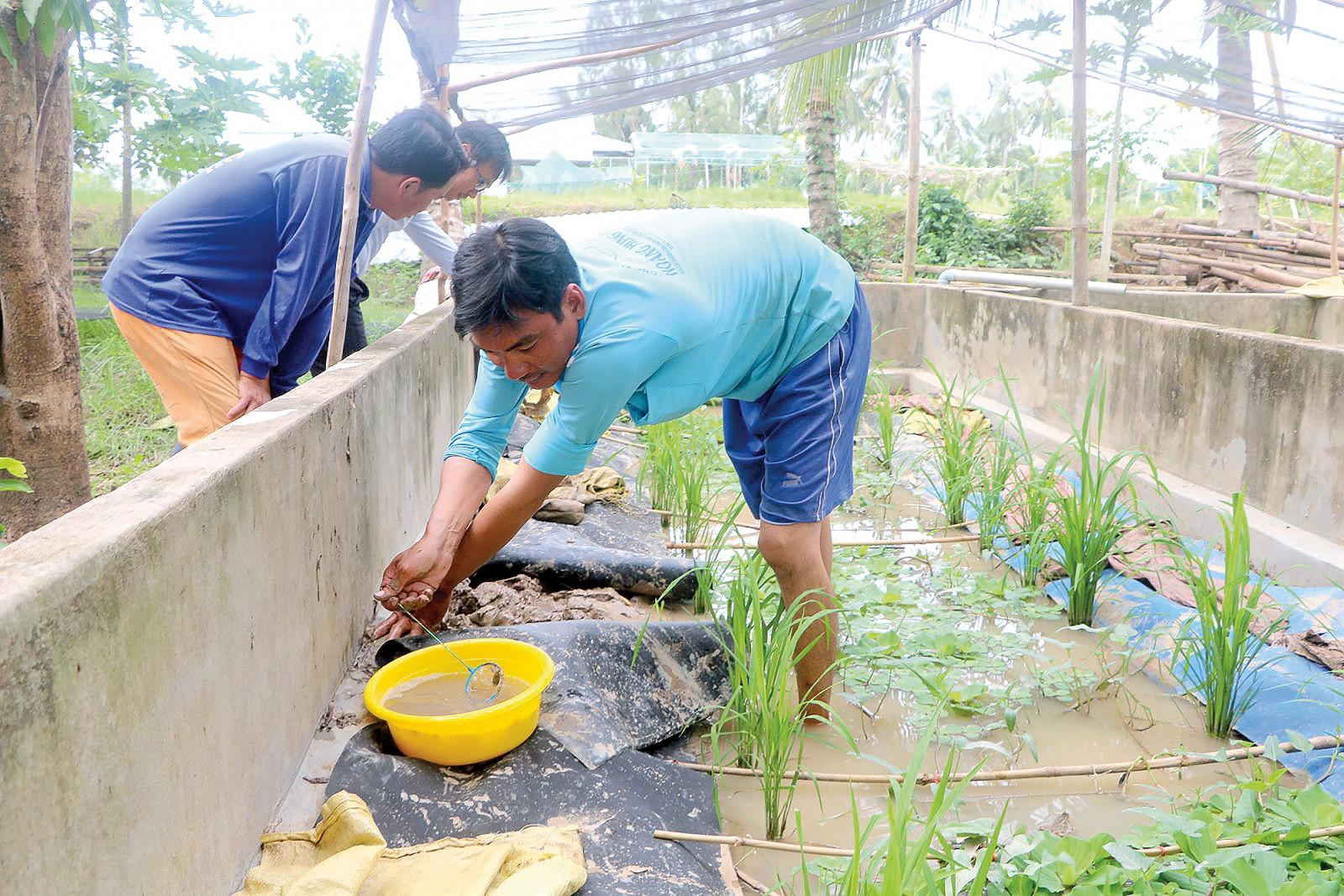 Anh Nguyễn Thanh Khắc (bên phải) thu hoạch trứng lươn để ép lươn giống.