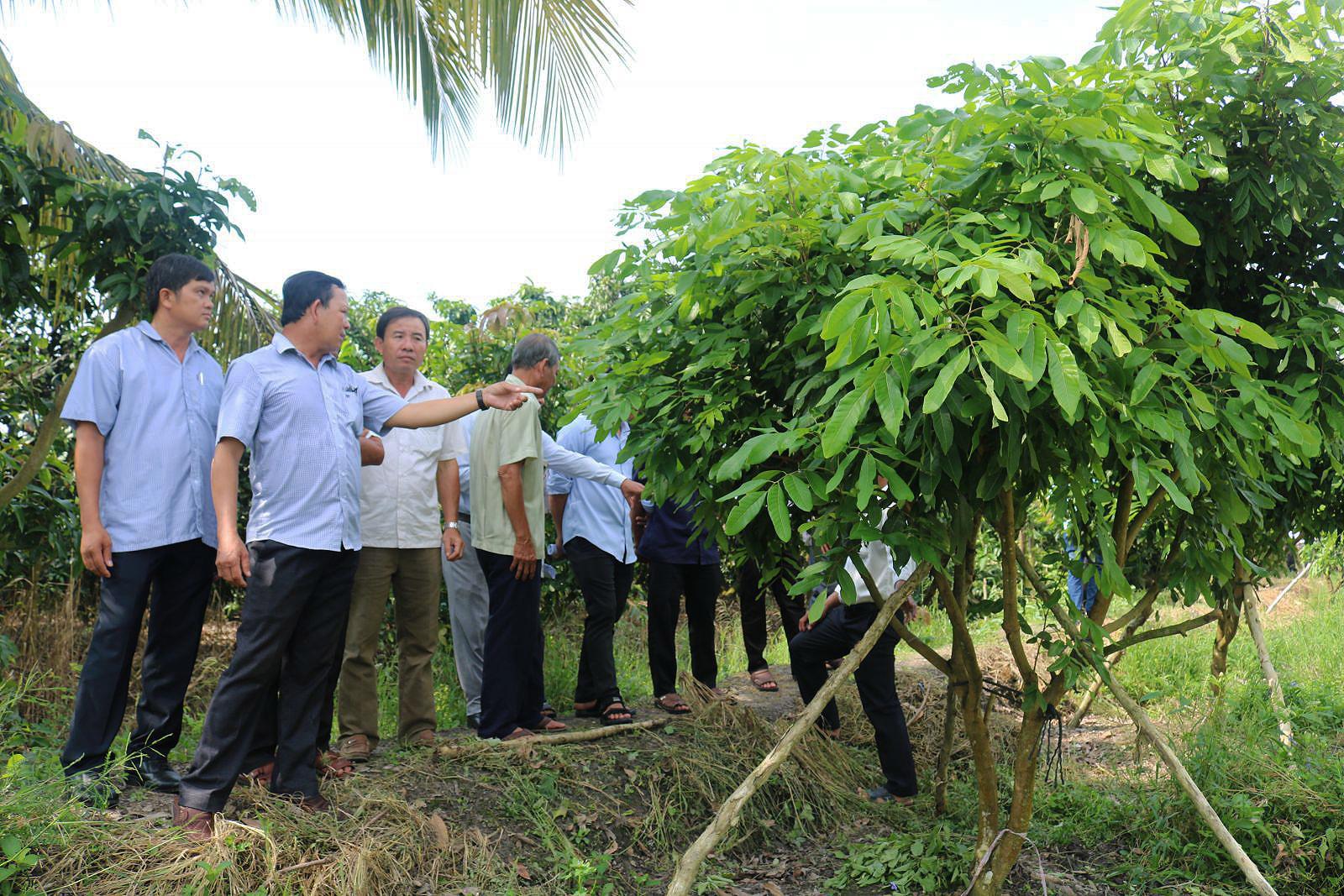 Nông dân tham quan thực tế tại một vườn cây ở xã Thới Hưng nhân dịp tham dự hội thảo.