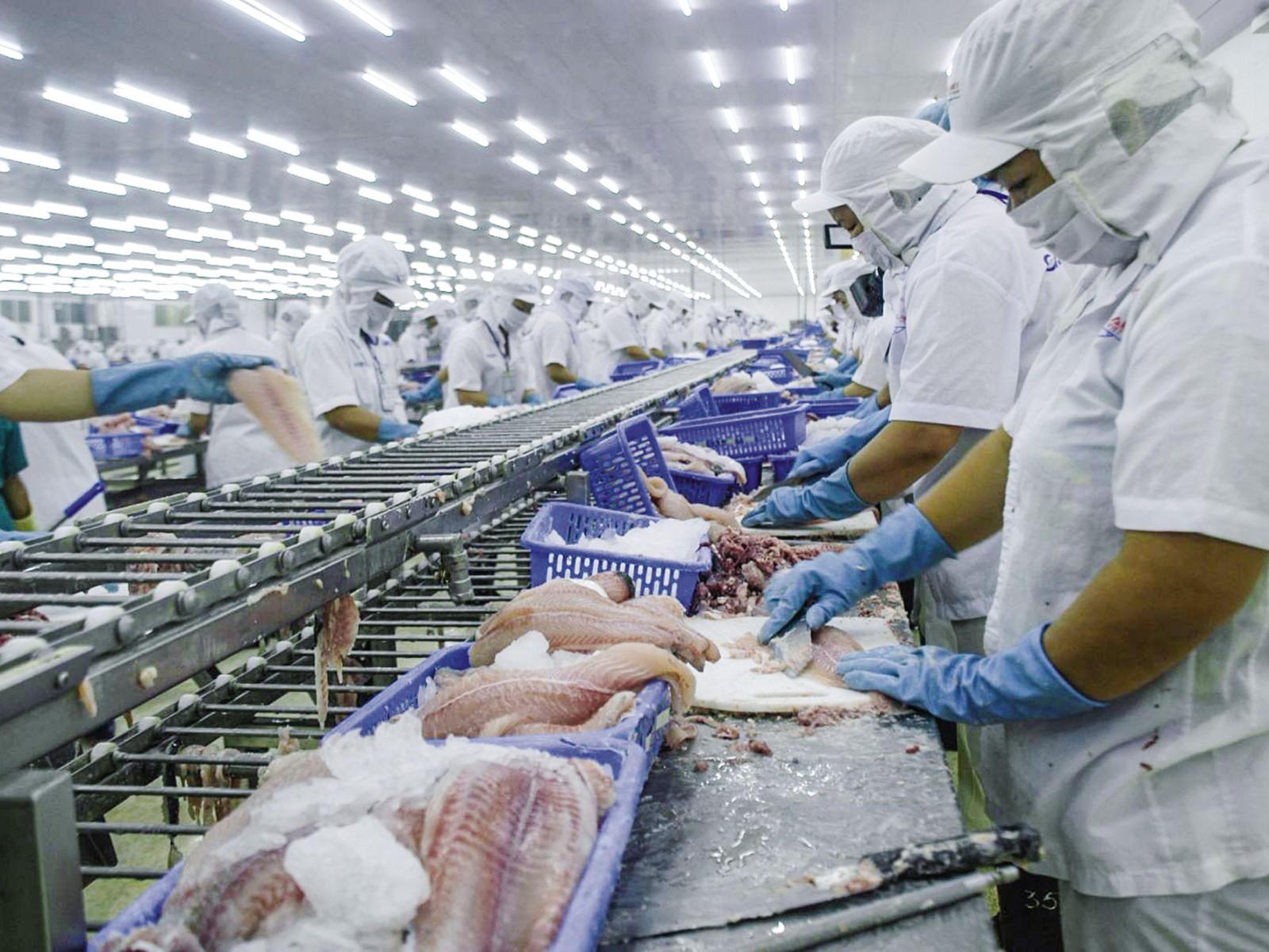 Chế biến cá tra phile xuất khẩu tại Công ty Cổ phần Xuất nhập khẩu thủy sản Cần Thơ (CASEAMEX).