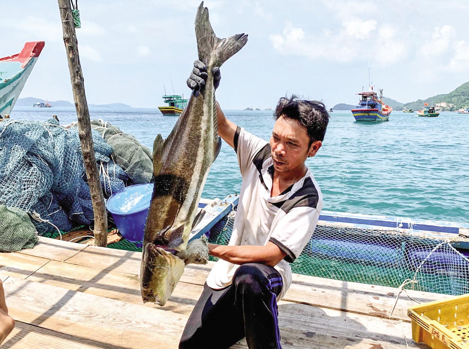 Anh Khang và thành quả sau 7 tháng nuôi cá bớp.