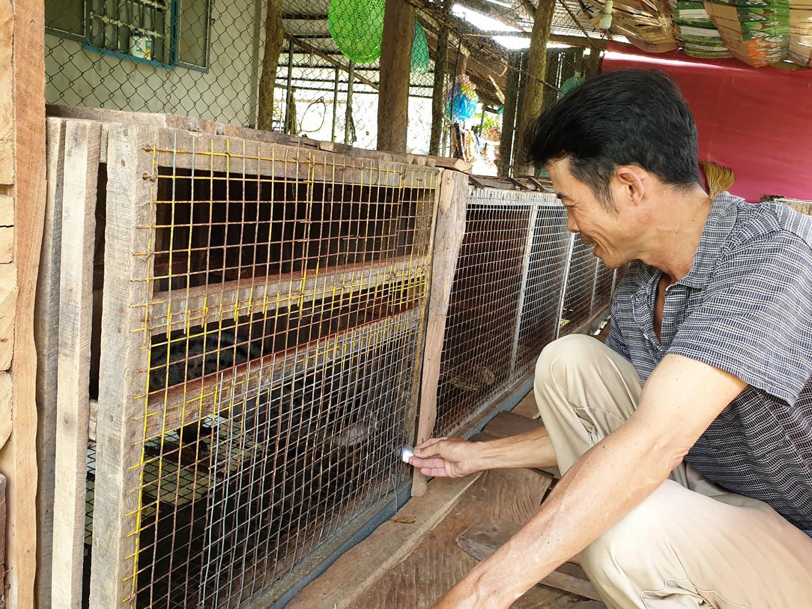 Anh Trần Quốc Khánh, Giám đốc HTX động vật hoang dã Tư Khánh giới thiệu mô hình nuôi chồn hương của gia đình.