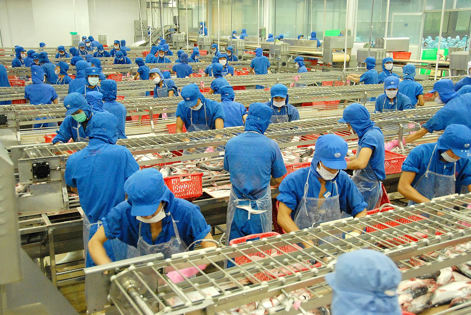 Chế biến cá tra xuất khẩu tại Nhà máy thủy sản IDI.