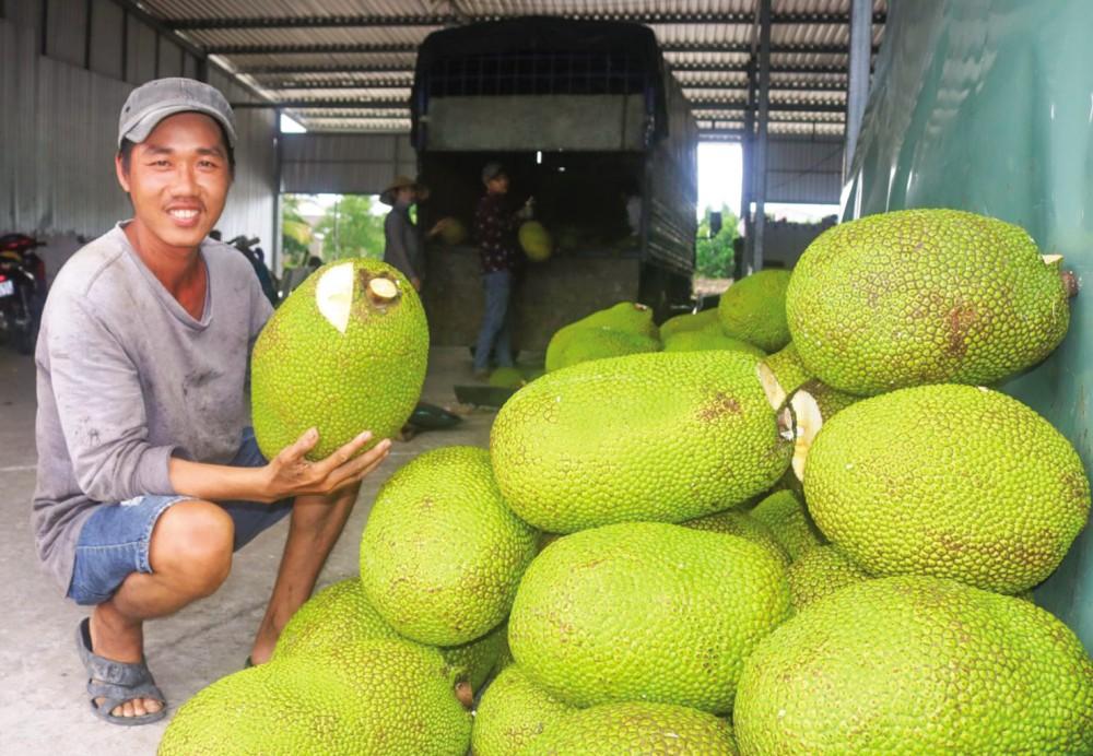 Thu mua mít Thái phục vụ xuất khẩu tại một vựa thu mua mít ở huyện Phong Điền, TP Cần Thơ.