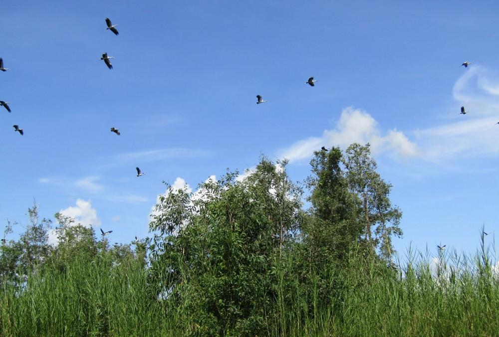 Một góc trời mây Sân chim Vàm Hồ.