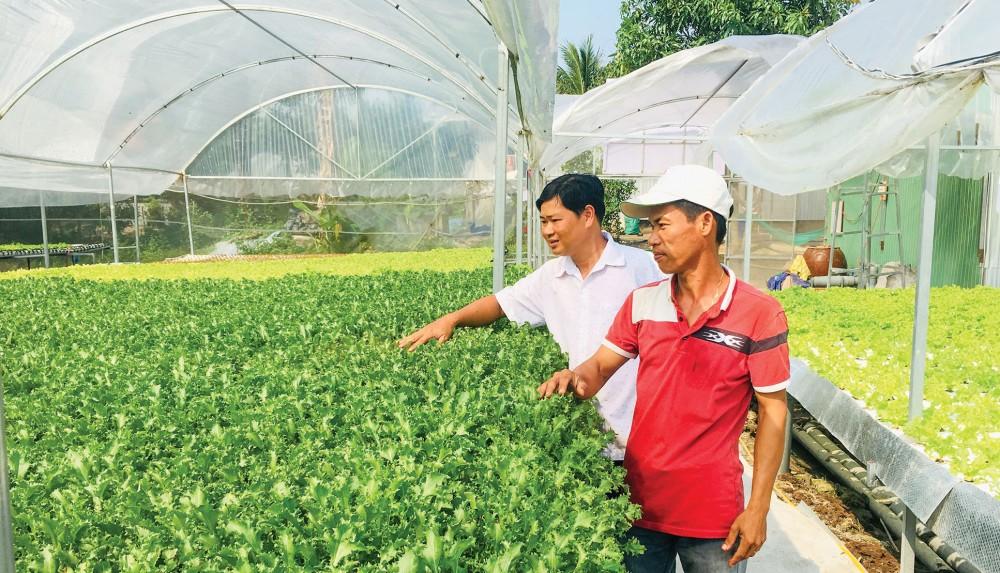 Mô hình trồng rau thủy canh của anh Nguyễn Văn Thanh ở xã Vĩnh Thuận, huyện Châu Thành, An Giang cung cấp sản phẩm chất lượng, an toàn.