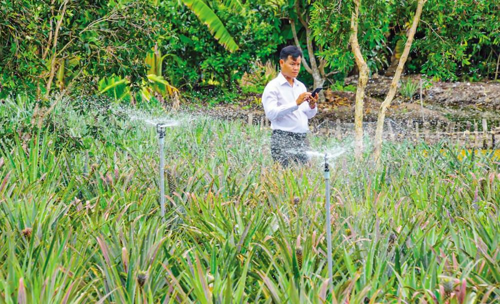 Nông dân sử dụng công nghệ số điều khiển từ xa bằng điện thoại để tưới nước cho vườn khóm.