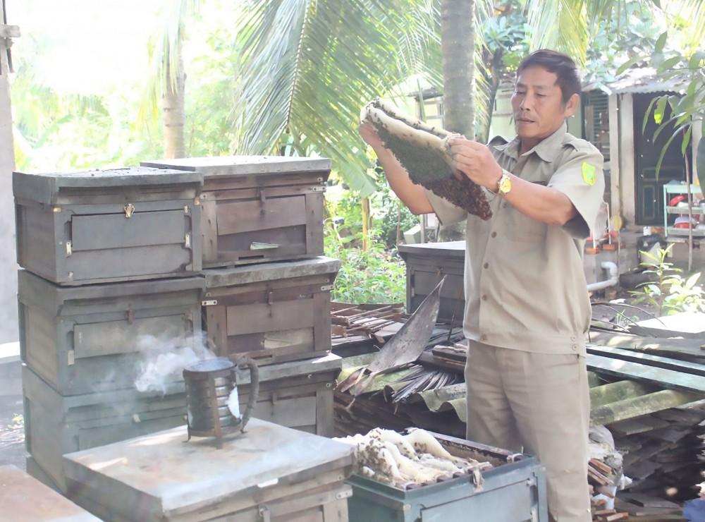 Cựu chiến binh Nguyễn Văn Chủ chăm sóc đàn ong.