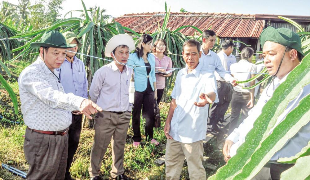 Đồng chí Trần Quốc Trung, Bí thư Thành ủy tham quan mô hình trồng thanh long ruột đỏ tại huyện Thới Lai. Ảnh: ANH DŨNG