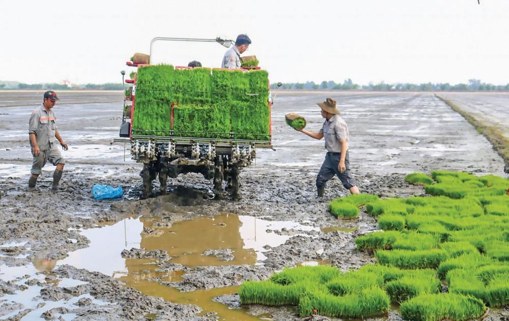 Dự án VnSAT hỗ trợ nông dân tại HTX Thịnh Phát ở huyện Vĩnh Thạnh, TP Cần Thơ thực hiện mô hình trình diễn máy cấy trong vụ đông xuân 2019-2020.